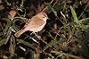 Rob Halff · Kleine Spotvogel