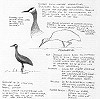 Gerald Driessens · Canadese Kraanvogel