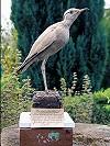 Bert de Bruin · Renvogel