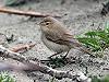 Martin van der Schalk · Kleine Spotvogel