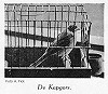 A. Fick · Zwartkopgors