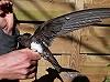 Vincent van der Spek · Alpengierzwaluw
