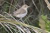 Jaap Denee · Kleine Spotvogel