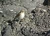 Rutger Rotscheid · Kleine Spotvogel