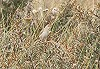 Rene Alberts · Kleine Spotvogel