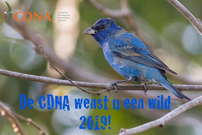 Overzicht Van Alle In Nederland Waargenomen Vogels Dutch Avifauna